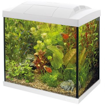 Start 30 Aquarium Wit - Tropische Vissen Kit
