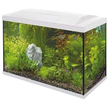 Start 70 Aquarium Wit - Tropische Vissen Kit