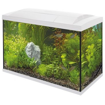 Start 100 Aquarium Wit - Tropische Vissen Kit