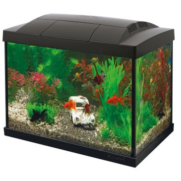 Start 20 Aquarium Zwart - Goudvis Kit