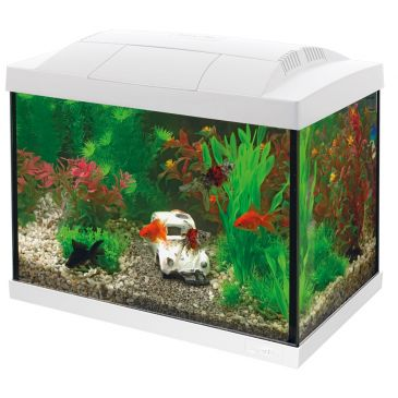 Start 20 Aquarium Wit - Goudvis Kit
