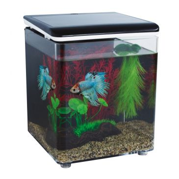 SuperFish Home 8 Aquarium + Betta Kit | Betta aquarium